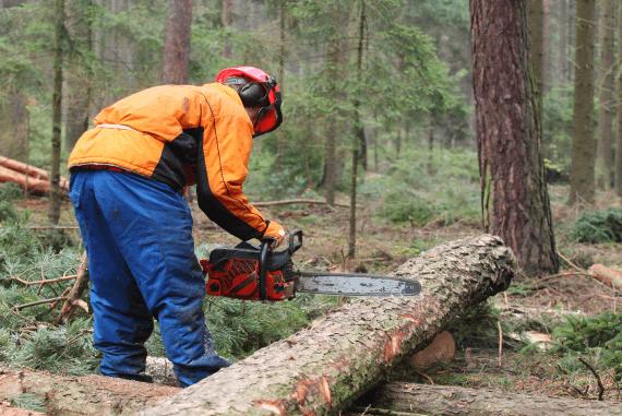 Penebangan pohon