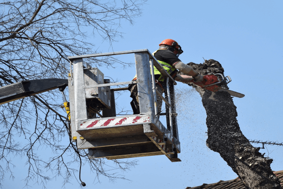 A person operating a chainsaw at height